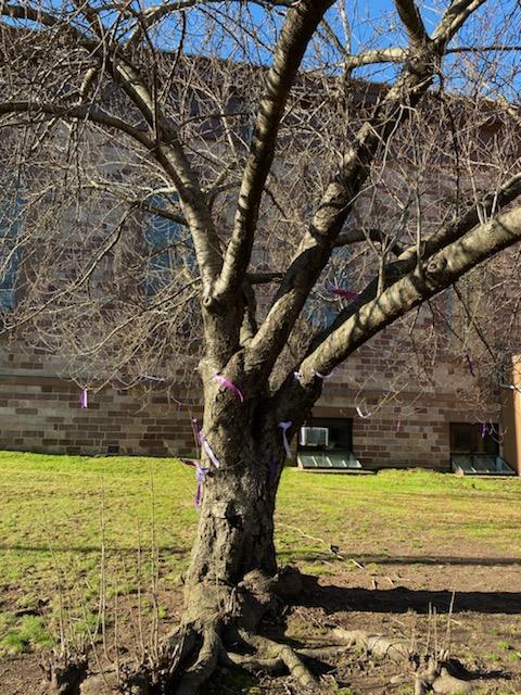 Lenten Prayer Tree